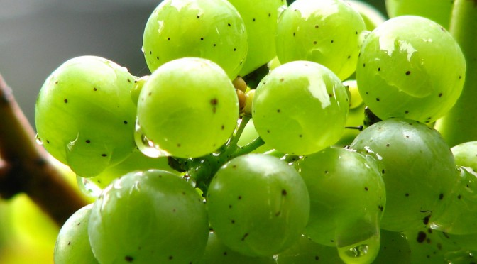 Eines der besten Weinanbaugebiete weltweit – das französische Bordeaux