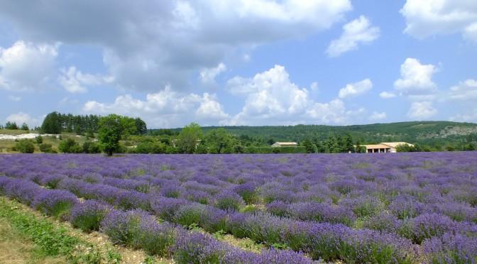 Das Anbaugebiet der besten Roséweine ganz Frankreichs – die wunderschöne Provence