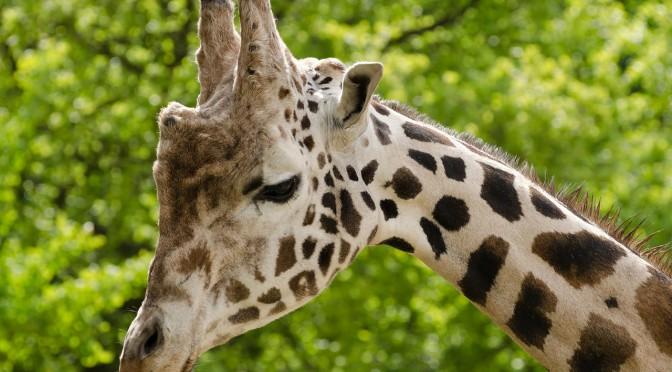 Zoo Antwerpen – Einer der ältesten Tierparks weltweit